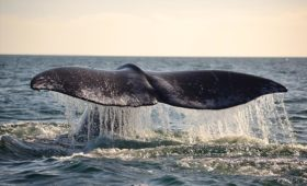 Whale Watching Tours in Baja California, Mexico